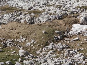 Le tre giovani marmotte