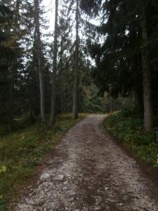 La strada che porta al sentiero