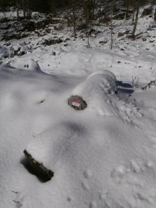 Bollo fra la neve