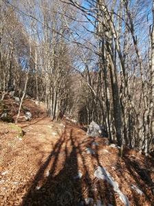 Nel bosco verso casera Centolina