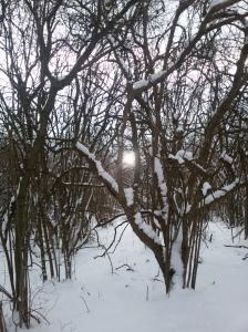 Il riflesso del sole sulla Livenza