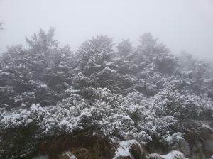Neve lungo la carrareccia che corre dal Cansiglio al Piancavallo
