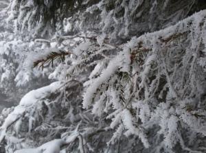 Il freddo e la neve creano un ambiente unico