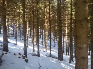 Raggi di sole fra il fitto bosco