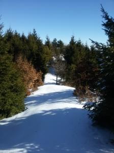 Passaggio obbligato fra gli alberi