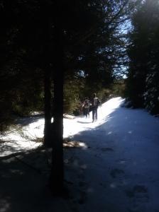 Ancora nel bosco