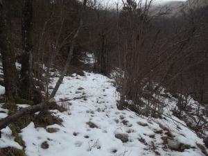 Neve e tracce di animali. Nessuna traccia dell'uomo!