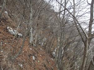 Ravanando tra gli alberi