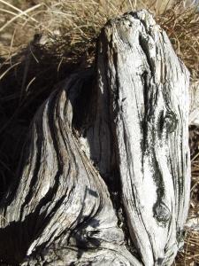 Magie del legno