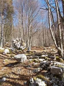 Ancora verso casera Val de Friz