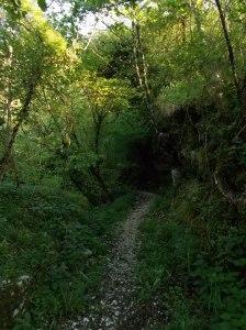 Sentiero CAI 981/982