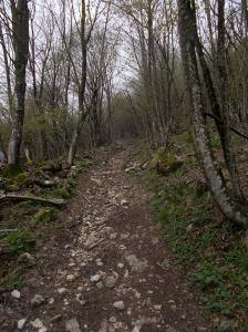 Sentiero CAI che porta verso casera Rupeit