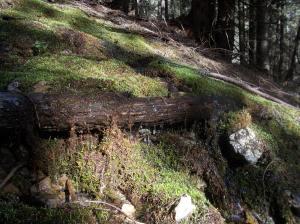 Varie sorgenti in questo periodo lungo la salita