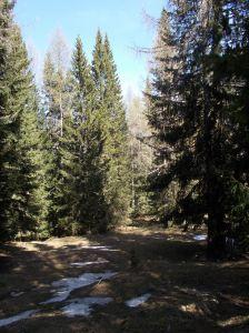 Nel bosco verso casera Roncada