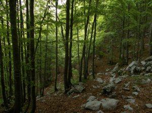 Il bel bosco sopra casera Capovilla