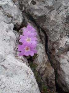 Colori fra la roccia