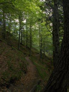 Il bosco dietro al rifugio