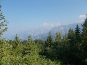 Il bosco si apre nei pressi del rifugio Pradut