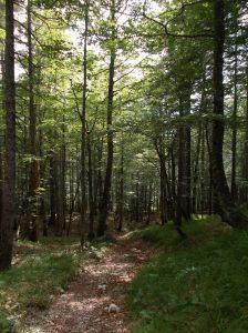 Ultimo tratto nel bosco
