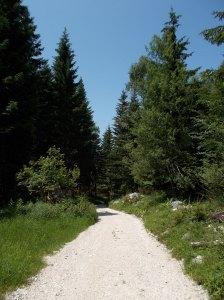 Verso l'auto per facile forestale