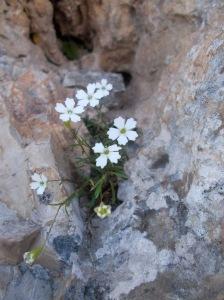 Magia fra la roccia