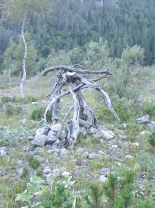 Ometto legnoso