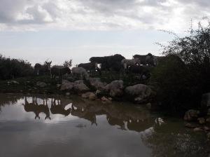 Asini a ridosso della lama