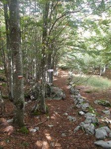 Nel bel bosco vicino ai ruderi dei Casoni Centolina