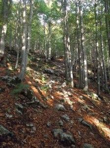 Nel bosco lungo il sentiero CAI 924