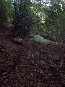 Nel bosco sopra malga Pian Lastre
