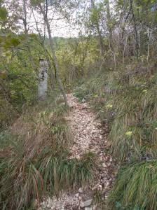 La natura si riprende i suoi spazi (sentiero della Memoria)