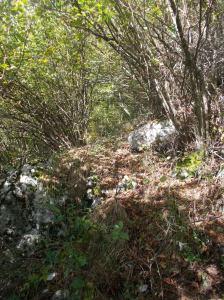 La traccia fra alberi, rami e qualche rovo