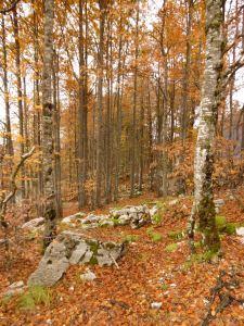 Meraviglioso bosco