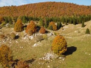 Colori d'autunno nei pressi di malga Costa Cervera