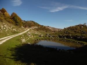 Lama nei pressi dei ruderi di malga Bos