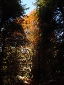 Tra i sempreverdi l'autunno regala colore