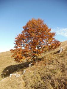 Colori d'autunno sul Col dei S'cios