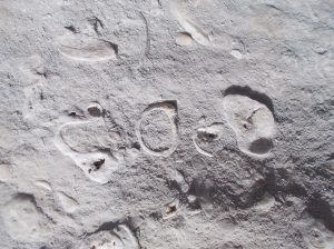 Ancora fossili