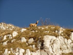 Le capre del Toriòn