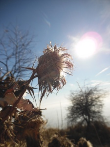 Cardi al sole