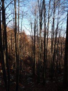 Attraversando il bosco lungo il sentiero CAI 924