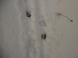 Passaggio di cervo
