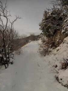 Sentiero CAI 981