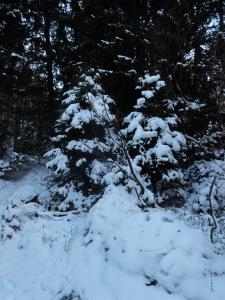 Un po' di neve dove non osa il sole