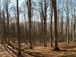 Fuori traccia nel bosco
