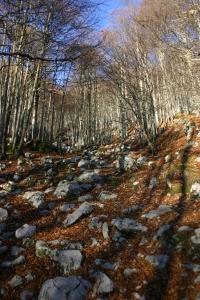 Nel bosco sopra casera Casavento