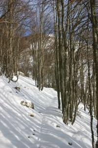 Neve immacolata