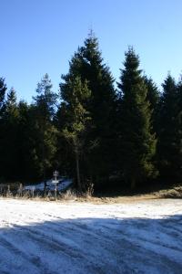 Forestale ghiacciatissima (e un volo fatto)