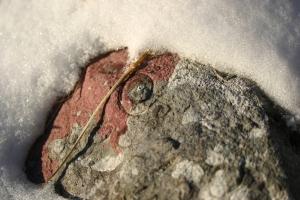 Fossili fra la neve