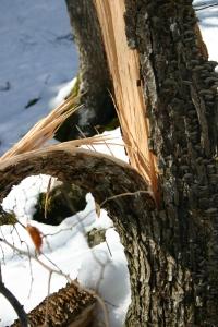 Funghi su albero